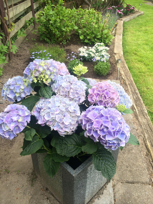 blomster til haven online