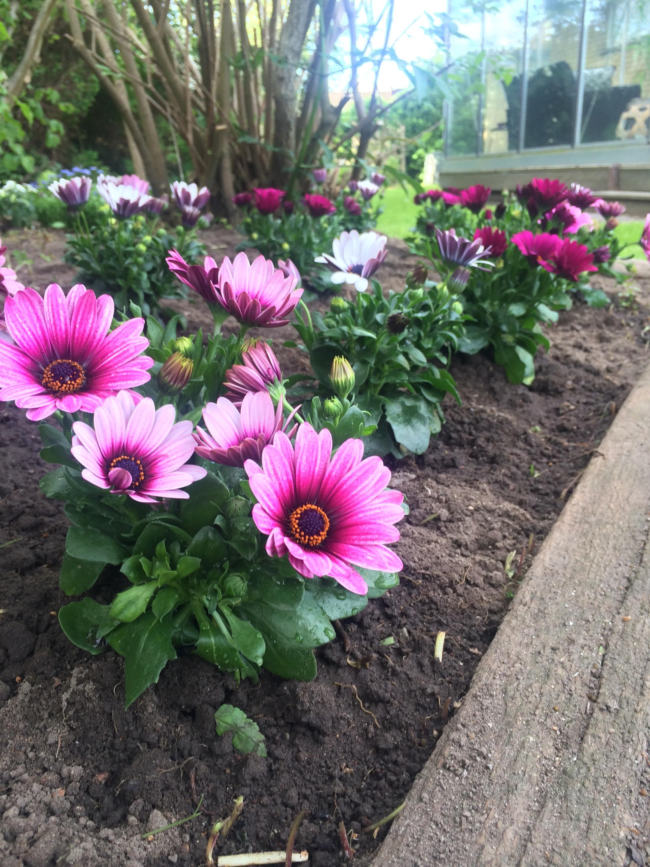Haven og blomster